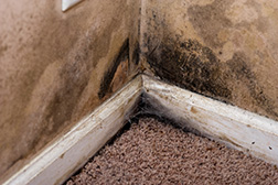 Complete Interiors Carpet Cleaning for Mold Remidiation